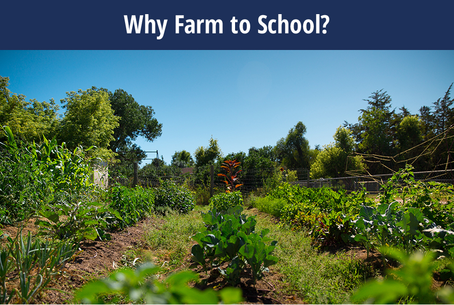 WHY TO FARM To School