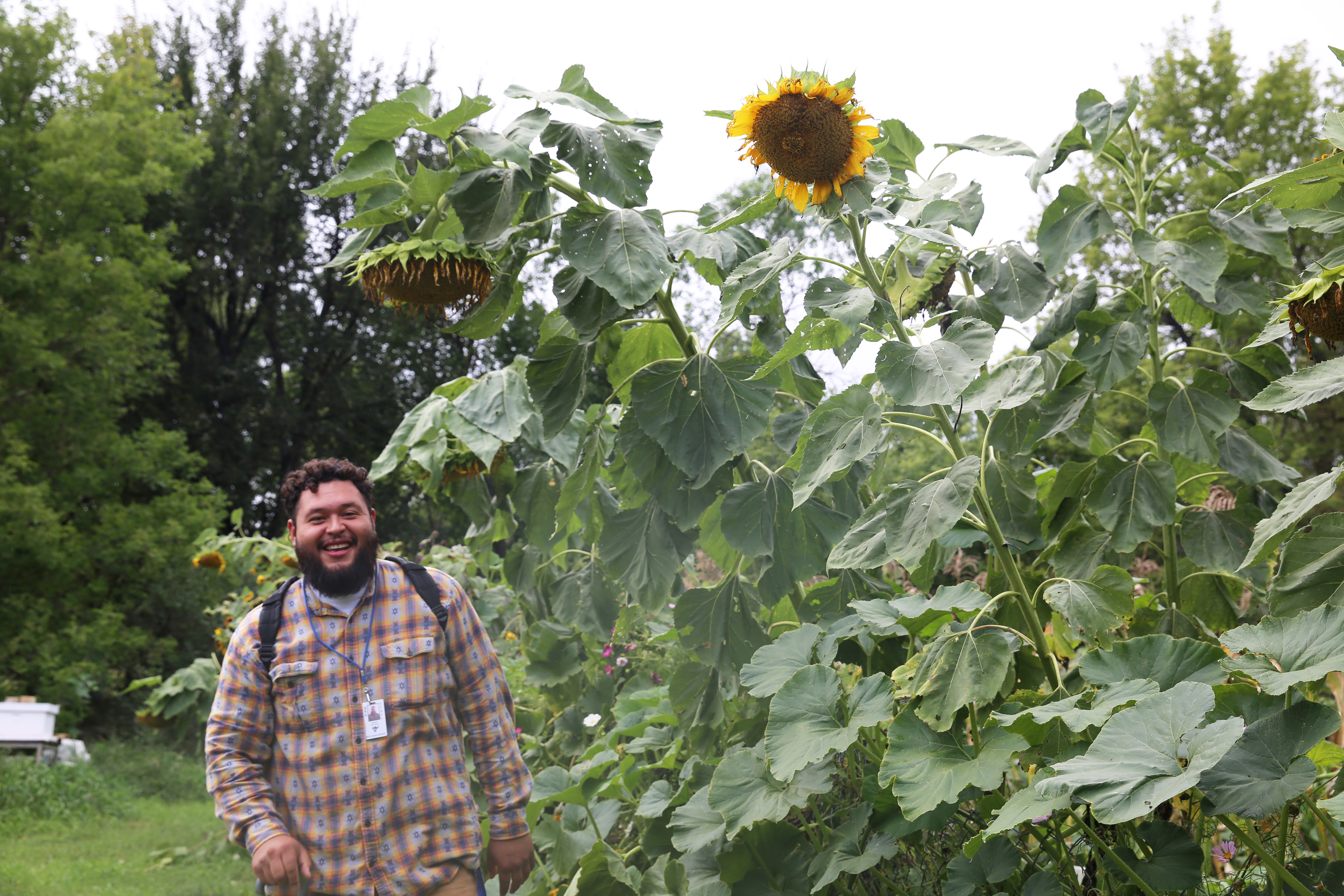 Marcus standing next to a 8 ft sunflower